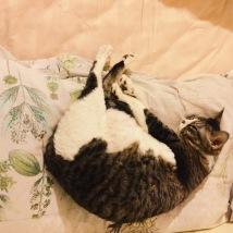 Fufu doing yoga